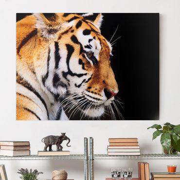 Stampa su tela - Tiger Beauty - Orizzontale 4:3