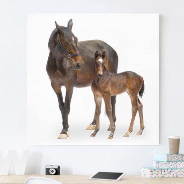 Stampa su tela - Trakehner Mare & Foal - Quadrato 1:1