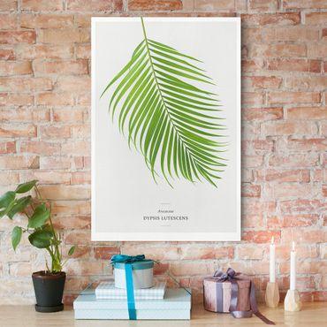 Stampa su tela - Tropical Leaf Areca Palm - Verticale 2:3
