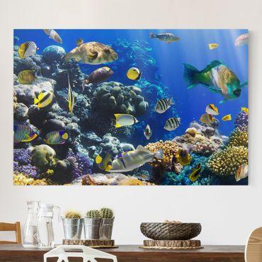 Stampa su tela - Underwater Reef - Orizzontale 3:2