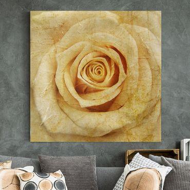 Stampa su tela - Vintage Rose - Quadrato 1:1