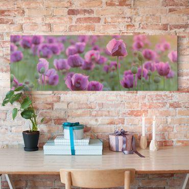 Stampa su tela - Purple Poppy Flower Meadow In Spring - Panoramico