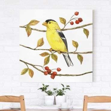 Stampa su tela - Birds And Berries - American Goldfinch - Quadrato 1:1