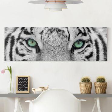 Stampa su tela - White Tiger - Panoramico