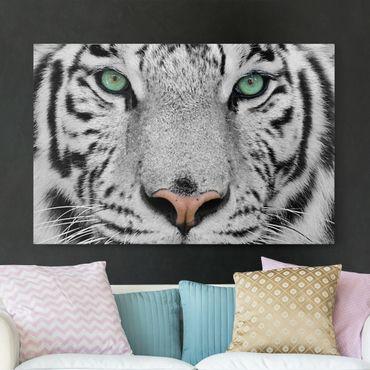 Stampa su tela - White Tiger - Orizzontale 3:2