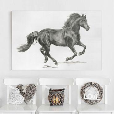 Stampa su tela - Wild Horse Trial - Stallion - Orizzontale 3:2