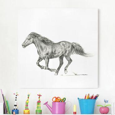 Stampa su tela - Wild Horse Trial - Mare - Quadrato 1:1
