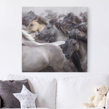 Stampa su tela - Cavalli selvaggi - Quadrato 1:1
