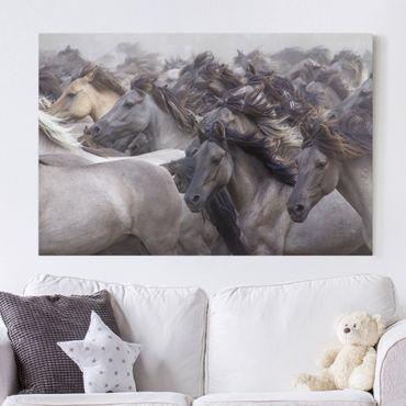 Stampa su tela - Cavalli selvaggi - Orizzontale 3:2
