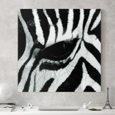 Stampa su tela - Zebra Crossing - Quadrato 1:1