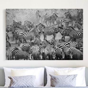 Stampa su tela - Zebra herd II - Orizzontale 3:2