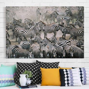 Stampa su tela - Zebra herd - Orizzontale 3:2