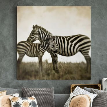 Stampa su tela - Zebra Couple - Quadrato 1:1