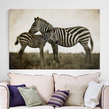 Stampa su tela - Zebra couple - Orizzontale 3:2