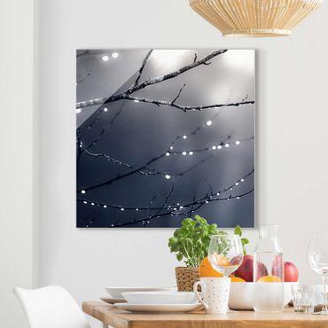 Quadro in vetro - Gocce di luce su ramo di betulla