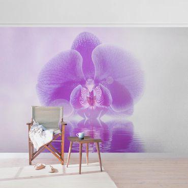 Carta da parati metallizzata - Orchidea viola sull'acqua