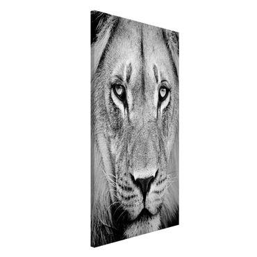 Lavagna magnetica - Old Lion - Formato verticale 4:3
