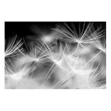Lavagna magnetica - Moving Dandelions Close Up On Black Background - Formato verticale 4:3