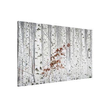 Lavagna magnetica - Birches in Autumn - Formato orizzontale 3:2