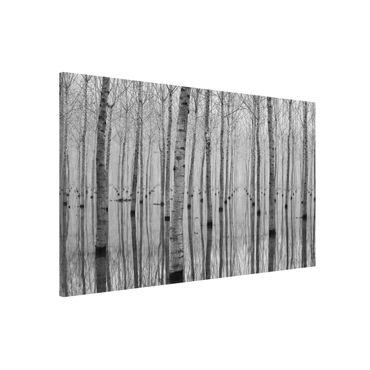 Lavagna magnetica - Birches in November - Formato orizzontale 3:2