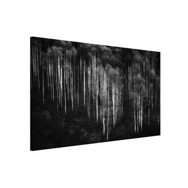 Lavagna magnetica - Foreste di betulle in Aspen - Formato orizzontale 3:2