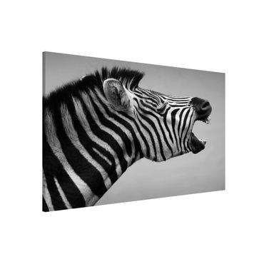 Lavagna magnetica - Rawling Zebra II - Formato orizzontale