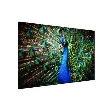 Lavagna magnetica - Noble Peacock - Formato orizzontale