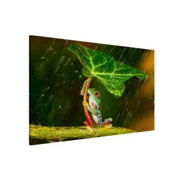 Lavagna magnetica - Rana In The Rain - Formato orizzontale 3:2