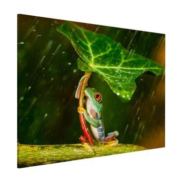 Lavagna magnetica - Rana In The Rain - Formato orizzontale 3:4