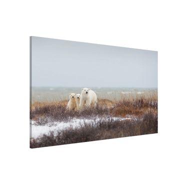 Lavagna magnetica - Orso polare e suoi cuccioli - Formato orizzontale 3:2