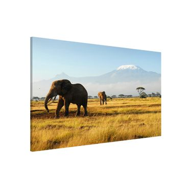 Lavagna magnetica - Elephants In Front Of The Kilimanjaro In Kenya - Panorama formato orizzontale