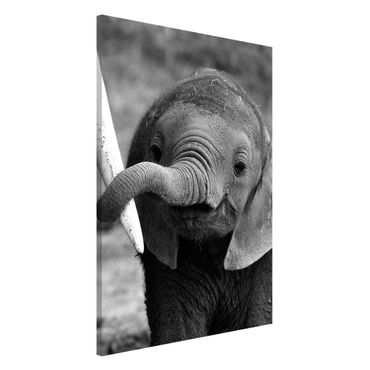 Lavagna magnetica - Baby Elephant - Formato verticale 2:3