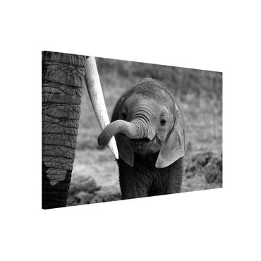 Lavagna magnetica - Baby Elephant - Formato orizzontale 3:2