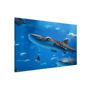 Lavagna magnetica - Fish In The Sea - Formato orizzontale