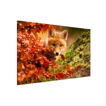 Lavagna magnetica - Fox in Autumn - Formato orizzontale 3:2