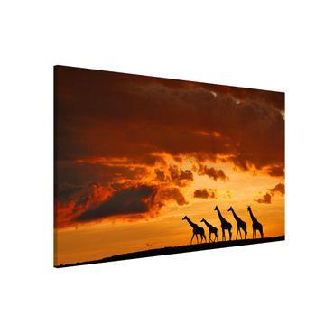 Lavagna magnetica - Five Giraffes - Formato orizzontale 3:2