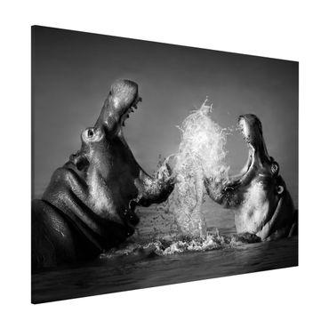 Lavagna magnetica - Hippo Fight - Formato orizzontale 3:4