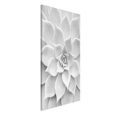 Lavagna magnetica - Cactus Succulent - Formato verticale 4:3