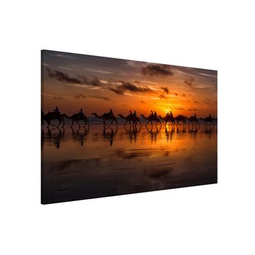Lavagna magnetica - Camel Safari - Formato orizzontale 3:2