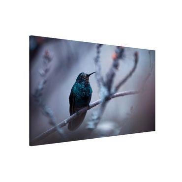 Lavagna magnetica - Hummingbird in Winter - Formato orizzontale 3:2