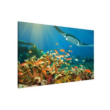 Lavagna magnetica - Coral Reef - Formato orizzontale