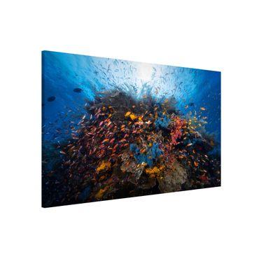 Lavagna magnetica - Lagoon with Fish - Formato orizzontale 3:2