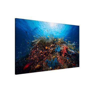 Lavagna magnetica - Lagoon Underwater - Formato orizzontale 3:2