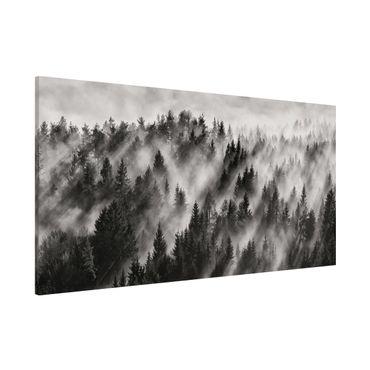 Lavagna magnetica - Raggi Luce nella foresta di conifere - Panorama formato orizzontale
