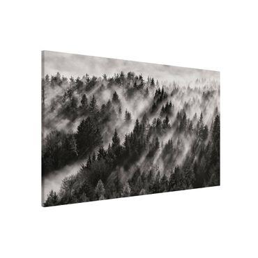 Lavagna magnetica - Raggi Luce nella foresta di conifere - Formato orizzontale 3:2