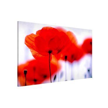 Lavagna magnetica - Magic Poppies - Formato orizzontale