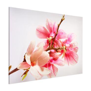 Lavagna magnetica - Magnolia Blossoms - Formato orizzontale 3:4