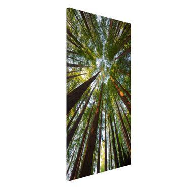 Lavagna magnetica - Sequoia Tree Tops - Formato verticale 4:3