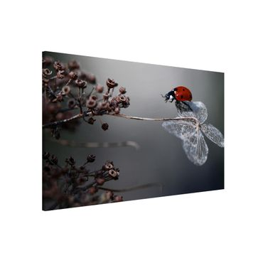 Lavagna magnetica - Ladybug on Hydrangea - Formato orizzontale 3:2