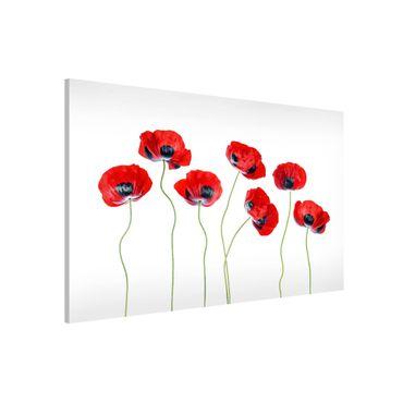 Lavagna magnetica - Ladybug Poppies - Formato orizzontale 3:2